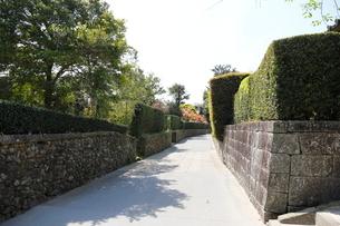 春の知覧武家屋敷跡 幾何学的に刈られた植木と石垣の写真素材 [FYI01501761]