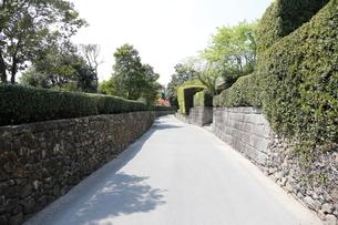 春の知覧武家屋敷跡 美しく刈られた植木と石垣の写真素材 [FYI01501783]