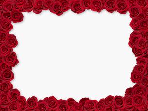 バラのフレームの写真素材 [FYI01501805]