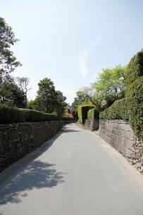 春の知覧武家屋敷跡 瓦屋根、美しく刈られた植木と石垣の写真素材 [FYI01501840]
