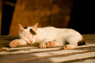 夕暮れに昼寝をするネコの写真素材 [FYI01501975]