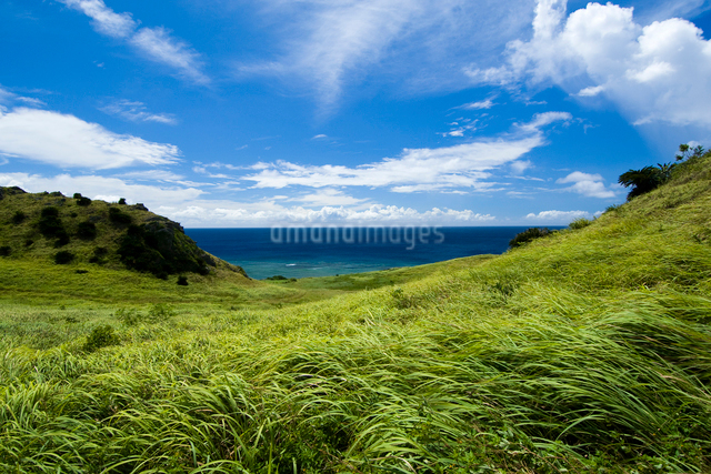 強風の草原と夏の空の写真素材 [FYI01502067]
