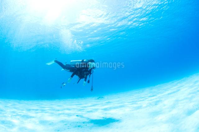 ダイバーと海底砂漠の写真素材 [FYI01502094]