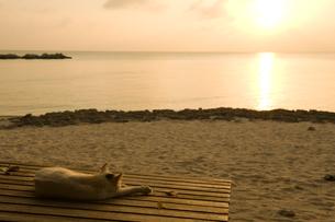 夕焼けと海辺のベンチで寝転ぶ猫の写真素材 [FYI01502120]