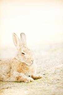 ウサギの写真素材 [FYI01502148]