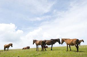 青空と草原の与那国馬の写真素材 [FYI01502246]