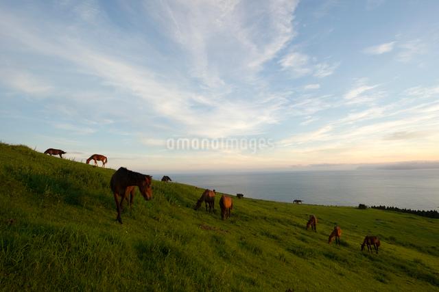夕暮れと御崎馬の写真素材 [FYI01502283]