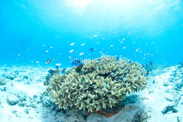 青い海、白い砂浜、サンゴと小魚の群れの写真素材 [FYI01502287]