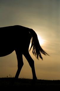 朝日と御崎馬のしっぽのシルエットの写真素材 [FYI01502301]