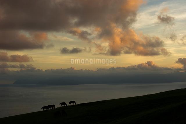 夕暮れと御崎馬の写真素材 [FYI01502323]