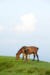 御崎馬の親子の写真素材 [FYI01502334]