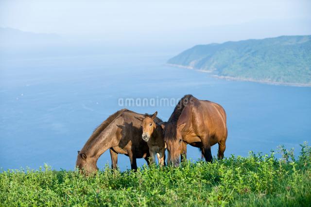 御崎馬の親子の写真素材 [FYI01502368]