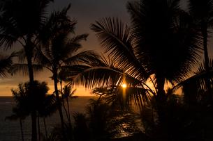海に沈む夕日と木漏れ日の写真素材 [FYI01502393]