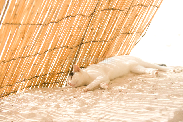 砂の上で昼寝する猫の写真素材 [FYI01502427]