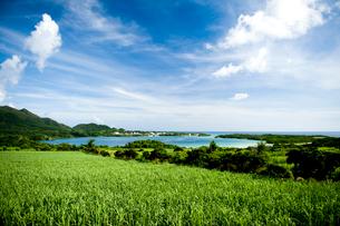 サトウキビ畑と川平湾の写真素材 [FYI01502447]