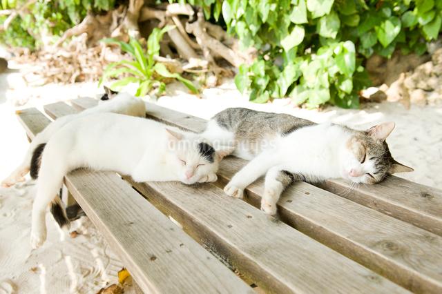 昼寝する猫の写真素材 [FYI01502492]