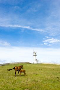 東崎の与那国馬と灯台の写真素材 [FYI01502511]