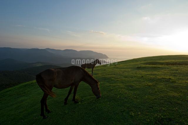 夕焼けと御崎馬の写真素材 [FYI01502514]