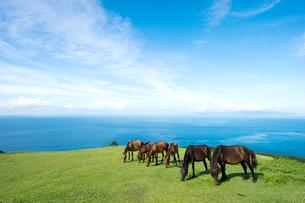 青空と都井岬の馬の写真素材 [FYI01502588]