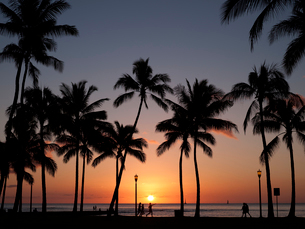 水平線に沈む夕日とヤシの木のシルエットの写真素材 [FYI01502609]