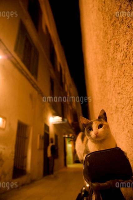 外灯と猫の写真素材 [FYI01502638]