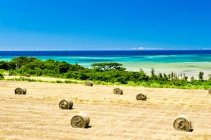 青空と青い海が見える牧草ロールのある畑の写真素材 [FYI01502665]