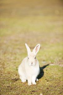 ウサギの写真素材 [FYI01502687]