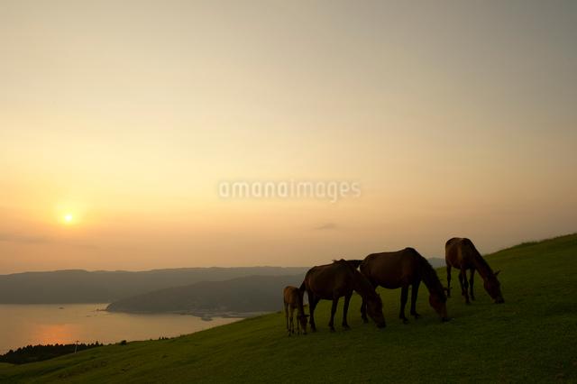 夕焼けと御崎馬の写真素材 [FYI01502703]