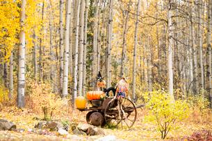紅葉の森のハロウィンのオブジェの写真素材 [FYI01502742]