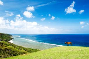 海辺に立つ1頭の馬の写真素材 [FYI01502790]
