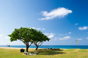 ビーチと2本の木の写真素材 [FYI01502802]