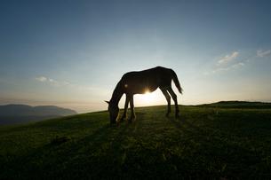 朝日を浴びる御崎馬のシルエットの写真素材 [FYI01502868]