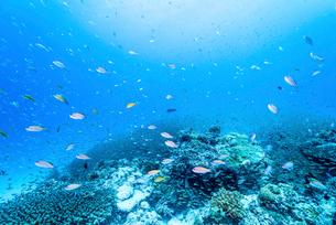 白い砂浜とサンゴ礁と魚の写真素材 [FYI01502982]