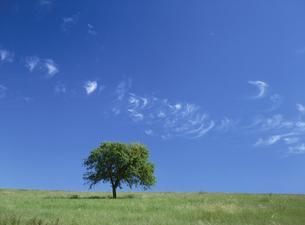 丘に立つ一本の道の写真素材 [FYI01503423]