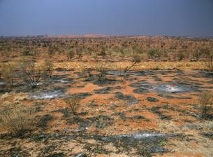 焼畑の赤地と木の写真素材 [FYI01503555]