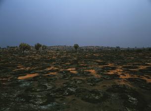 焼畑の赤地と木の写真素材 [FYI01503838]