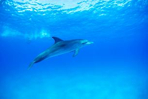 青い海の一頭のイルカの写真素材 [FYI01504373]