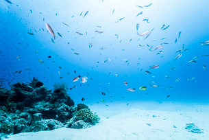 白い砂浜とサンゴ礁と魚の写真素材 [FYI01504395]