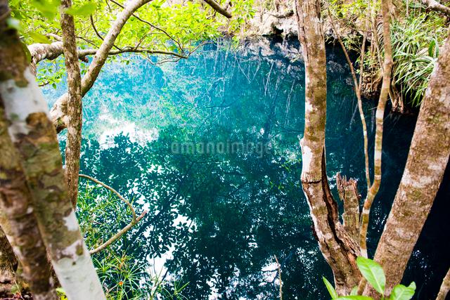 メキシコ セノーテ アンヘリータと森の写真素材 [FYI01504490]