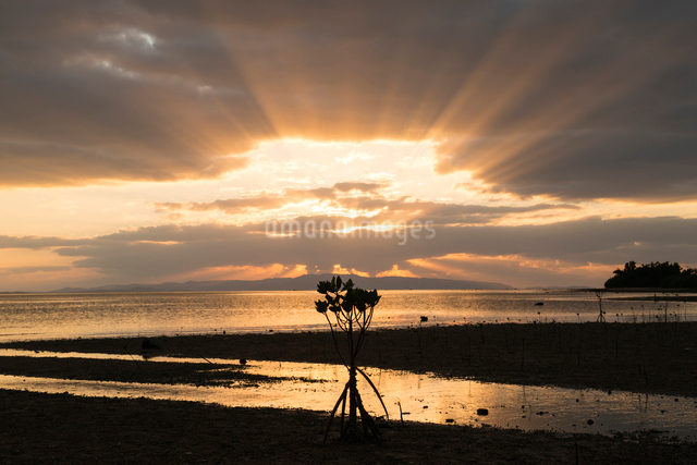 マングローブと夕焼けの写真素材 [FYI01504492]
