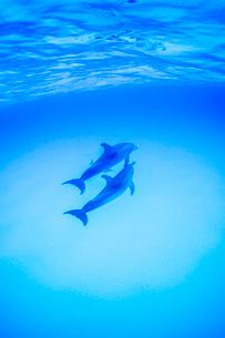 青い海、白砂の中を泳ぐ2頭のイルカの写真素材 [FYI01504513]