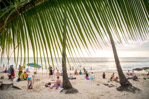 ヤシの葉とビーチで過ごす人々の写真素材 [FYI01504518]