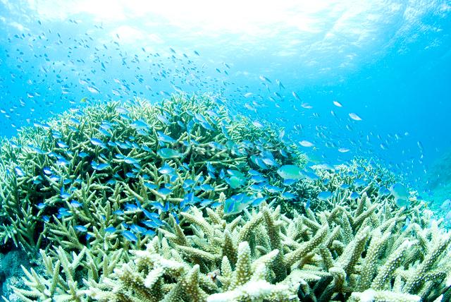エダサンゴと小魚の群れの写真素材 [FYI01504583]