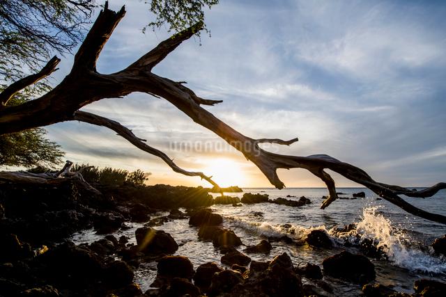 ハワイ島、夕暮れの流木と海の写真素材 [FYI01504674]