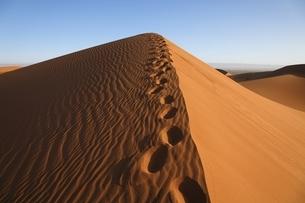 sand dunes, morning sunlight, my tracksの写真素材 [FYI01504701]