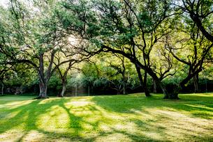 ハワイ州オアフ島の公園の写真素材 [FYI01504919]