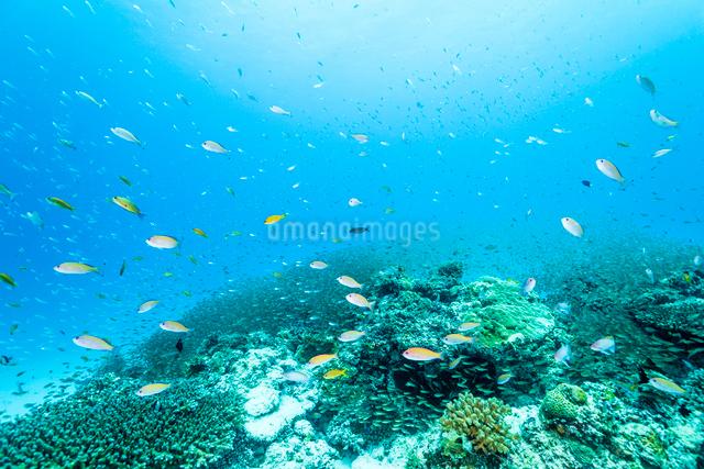沖縄のサンゴ礁の写真素材 [FYI01504985]