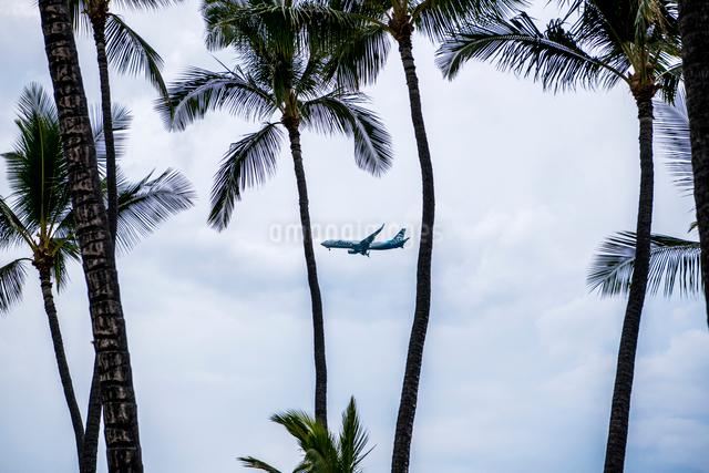 ヤシの木の間から見える飛行機の写真素材 [FYI01505098]