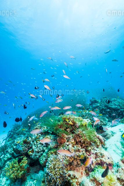 青い海、サンゴ礁と魚の写真素材 [FYI01505143]
