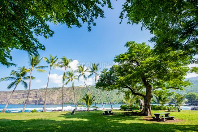 ハワイ島の海辺の公園のヤシの木の写真素材 [FYI01505163]